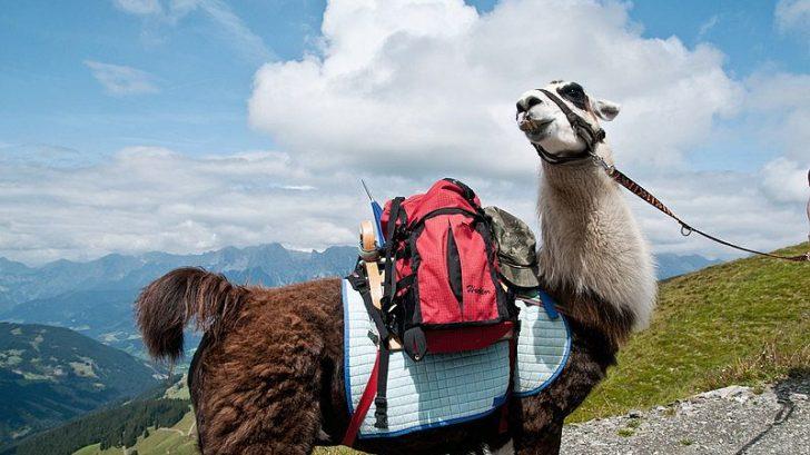 lama-trekking11-728x409.jpg