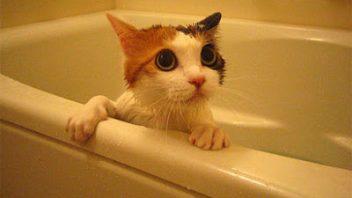 cat-bath-352x198.jpg