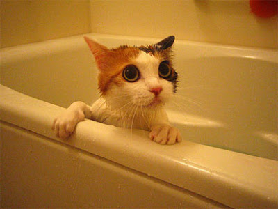cat-bath.jpg