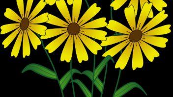 flowers-clip-art-5-352x198.png
