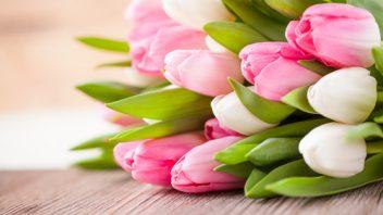 tulipany_shutterstock_252078115-352x198.jpg