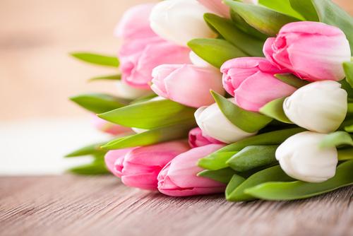tulipany_shutterstock_252078115.jpg