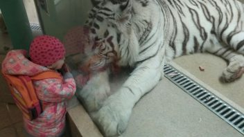 zoo-352x198.jpg