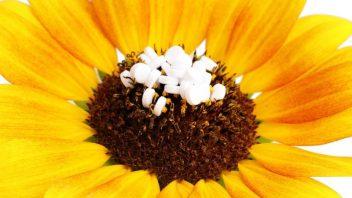homeopatie_homeopatika_profimedia-0151807144-352x198.jpg